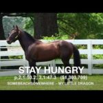 Stay Hungry - Paddock Footage