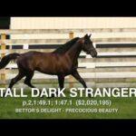 Tall Dark Stranger - Paddock Footage