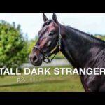 Tall Dark Stranger - Race Calls